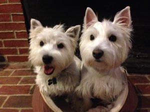 Cassie & Daisy