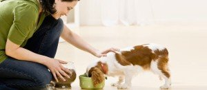 img-guide-pet-care