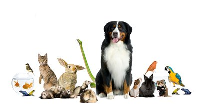 Little Bay Pet Services Llc Join Our Team