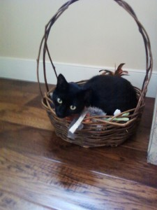 Kenny-in-toy-basket-2